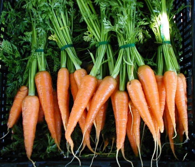 Καρότο: Το λαχανικό φάρμακο