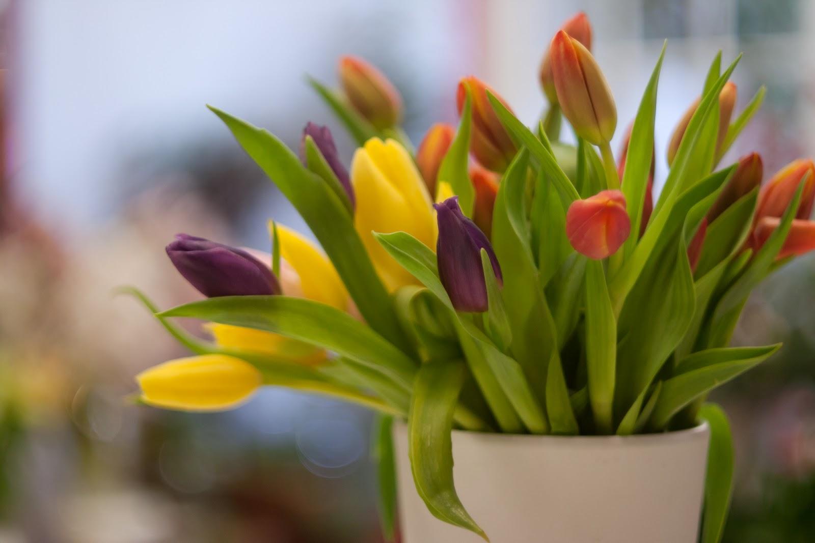 Βοηθείστε τα λουλούδια σας …να ζήσουν περισσότερο